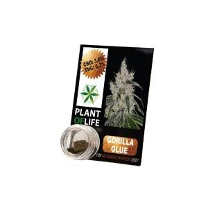 CBD Hash 1g Gorilla Glue 3.8%